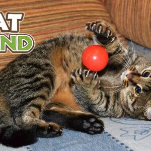Як користуватися котячим наповнювачем?